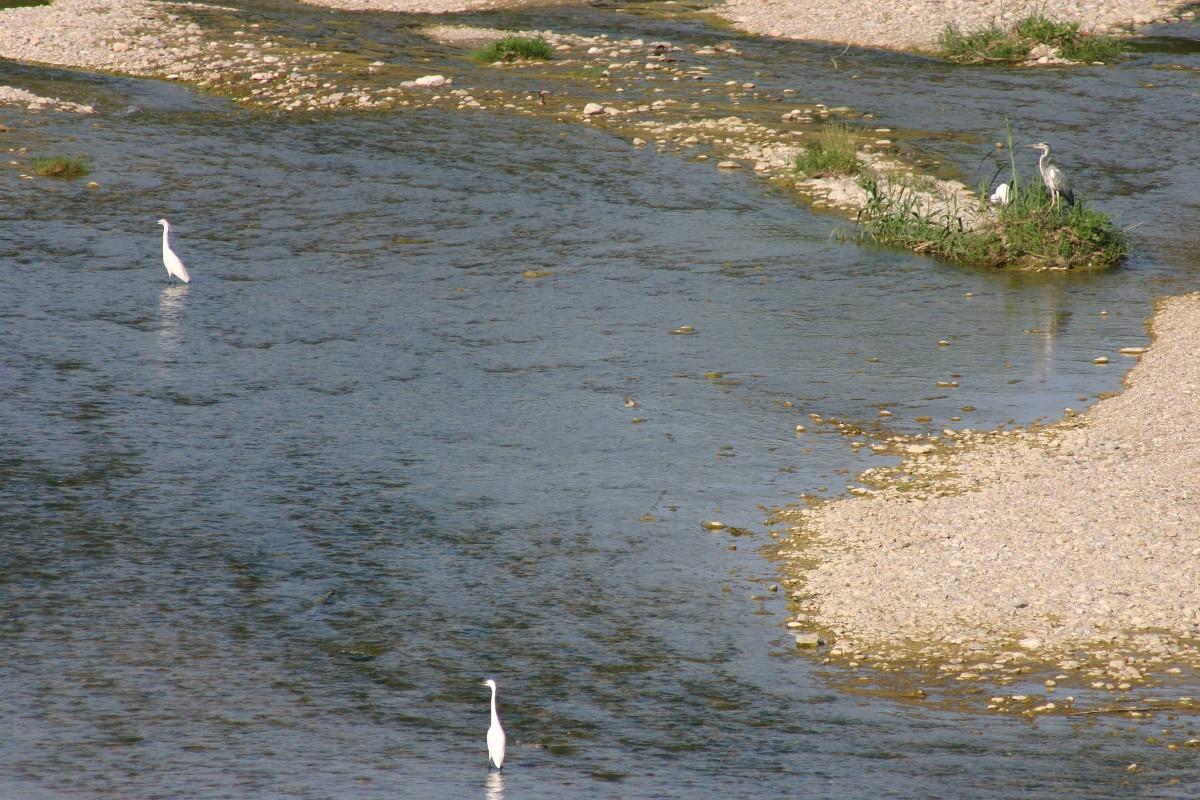 Foce del fiume Aso